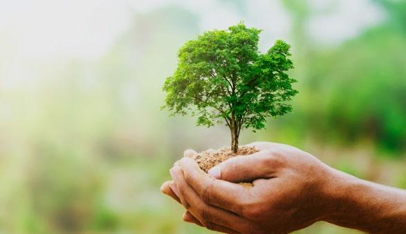 Endoterapia arbórea vegetal y eliminación de plagas