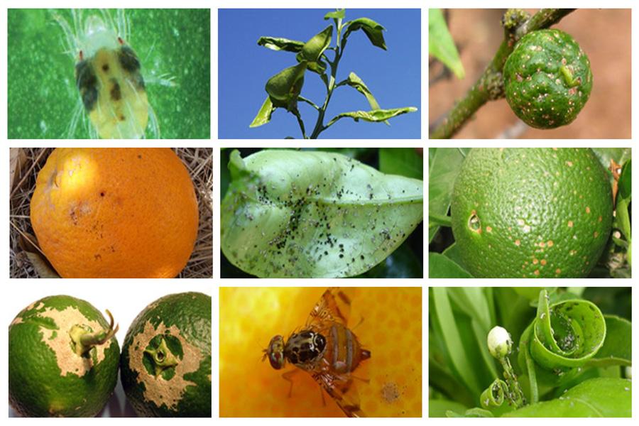 Endoterapia Cómo eliminar y prevenir las plagas en árboles frutales